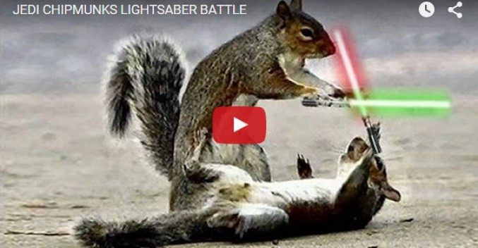 Star Wars Jedi Squirrels